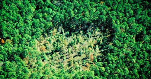 "Read the article ""Guidelines for Regenerating Southern Pine Beetle Spots"""