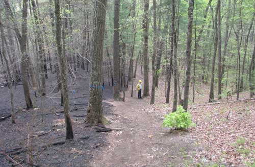 Burned plots on the left vs. unburned on the right. Photo by U.S. Forest Service.