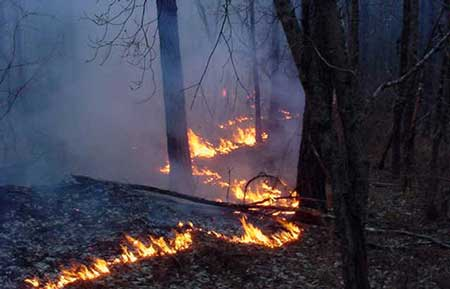 Prescribed fire line at night. Photo by Ricky Layson, courtesy of Bugwood.org.