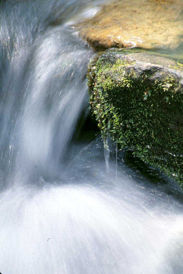 Southern forests provide clean drinking water to millions. Photo by U.S. Forest Service.