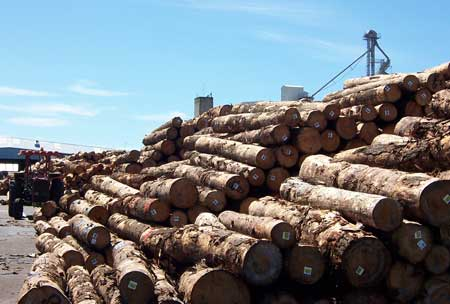 New Zealand has one the most well developed forest biosecurity programs in the world. The logs pictured here at the Port of Tauranga were fumigated prior to export to minimize the chance of accidentally spreading forest pests. Photo by Frank Koch, U.S. Forest Service.