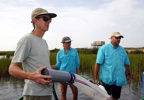Carl Trettin (left) works with TAMU-CC students on black mangrove sampling. Photo courtesy of TAMU-CC.