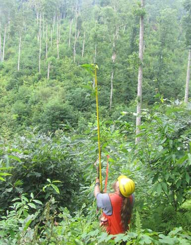 A University of Tennessee research technician measures a chestnut tree planted in 2011. Photo by U.S. Forest Service.