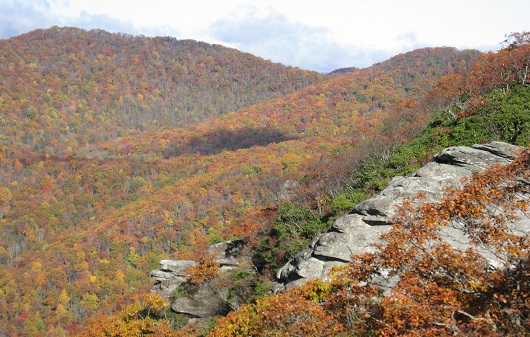 Fall view of part of the Coweeta watershed in North Carolina. Photo courtesy of Coweeta LTER.