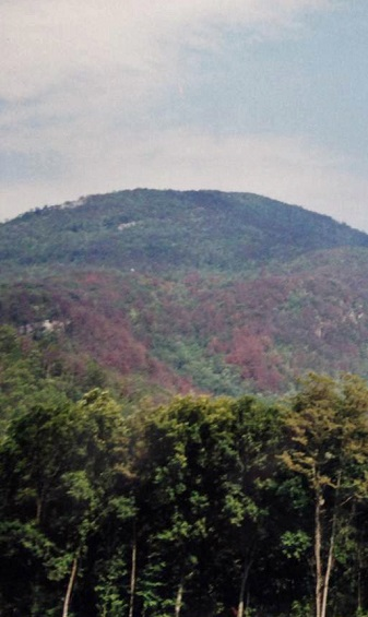 The rust-colored needles of dead red spruce trees are visible across Mt. Mitchell in 2001. Photo by Johnny Boggs.