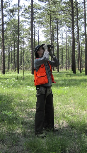 Dale Brockway conducting longleaf pine cone survey. Photo by Yoko Brockway.