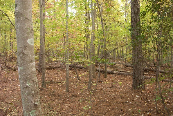 Tree species that are more distinct in terms of their evolutionary past may have uniquely important ecosystem functions in a forest community. Pictured is a diverse oak-hickory forest in North Carolina. Photo by Kevin Potter.