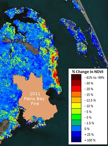 A ForWarn image from July 2014 shows the lingering impacts of saltwater damage from Hurricane Irene. The red colors on the map signify the areas with the greatest reductions of vegetation greenness.
