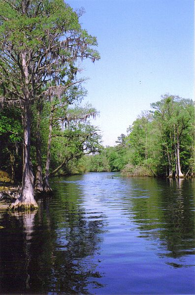 "Many tribal members, along with some historians and other scholars, believe that the river's name comes from ""Lumbee,"" an original Siouan name for the river, rather than from its part in the timber history of the area. Many tribal members and other locals continue to refer to the river as the Lumbee. Photo courtesy of Wikimedia Commons."