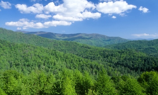 Edible and medicinal plants, or non-timber forest products, often have long traditions of cultural use in the Southern Appalachians. Photo courtesy of the National Forests in North Carolina.