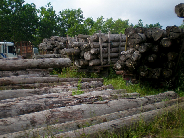 These illegal logs were seized in transit and are stored at district police offices, Riau, Indonesia. Photo courtesy of CIFOR.