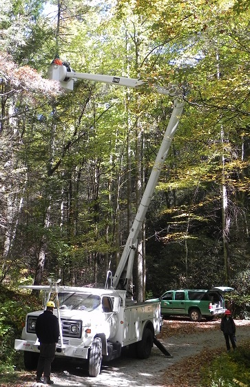 Scientists used a bucket truck to access tree crowns during sampling. Photo by U.S. Forest Service.