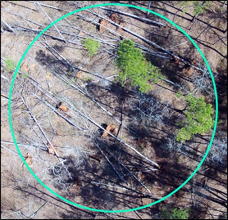 Aerial view of simulated tornado damage at the Piedmont National Wildlife Refuge near Round Oak, Georgia. Photo by U.S. Forest Service.