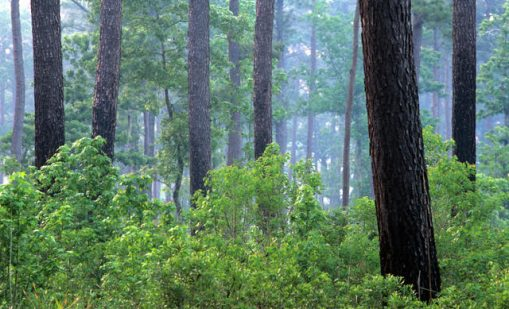 "Read the article ""Carbon Accumulation by Southeastern Forests May Slow"""