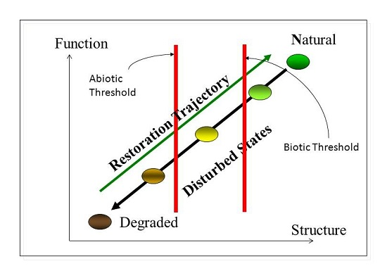 Parallel degradation and restoration trajectories in terms of functionality and structure.