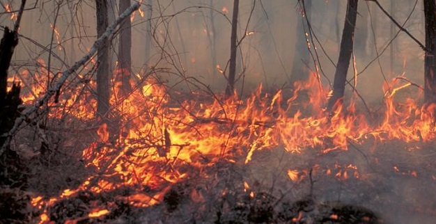 Prescribed fire could help control invasive earthworms. Photo by U.S. Forest Service, courtesy of Bugwood.org.