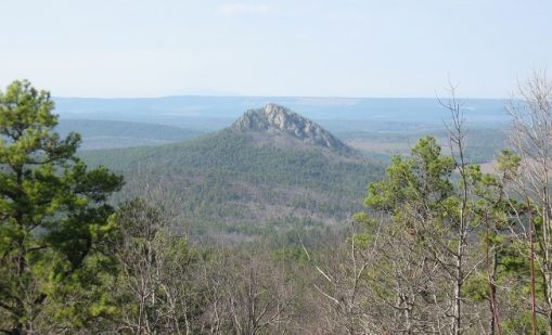 """Read the article """"Outlook for Mid-South Forests: The Next 50 Years"""""""