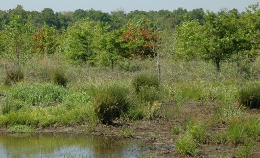 """Read the article """"Bringing Bottomland Forests Back to the Mississippi Alluvial Valley"""""""
