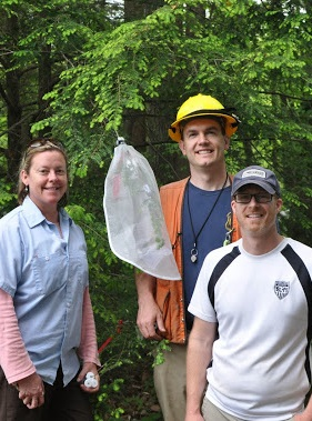 Forest Service researchers involved in the first eastern U.S. release of the predator fly. From left to right: Kimberly Wallin, Forest Service Northern Research Station and University of Vermont and Bud Mayfield and Bryan Mudder, Forest Service Southern Research Station. Photo by U.S. Forest Service.