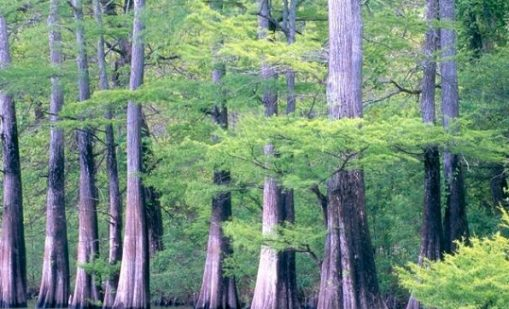 "Read the article ""The Future of the Francis Marion's Coastal Forests"""