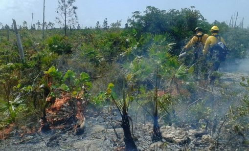 "Read the article ""Burning Caicos Pine Yards"""