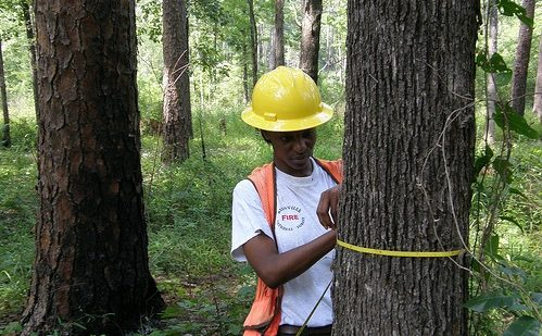 """Read the article """"Forests of Mississippi, 2014"""""""