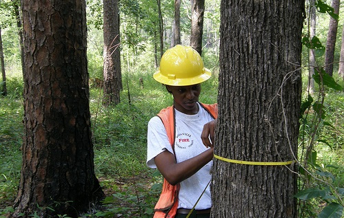 Forester Christine Harper takes inventory on the Biennville Ranger District in Mississippi. Photo by U.S. Forest Service.