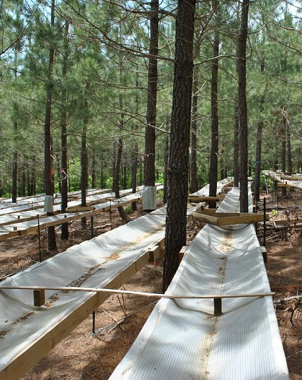 An exclusion structure allowed researchers to simulate a 30 percent rainfall reduction in the loblolly plots. Photo by Andy Laviner, Virginia Tech.