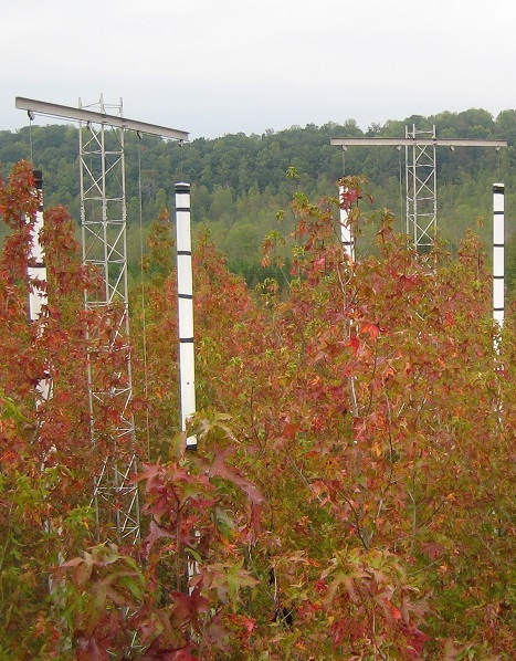 The Oak Ridge Free Air CO2 Enrichment (FACE) experiments let scientists examine how trees respond to elevated levels of carbon dioxide. Photo by Jeffrey Warren, Oak Ridge National Laboratory.
