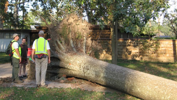 UFST team specialists discuss tree loss (and near miss!) with homeowner after Hurricane Gustav. Photo courtesy of Urban Forestry Strike Teams.