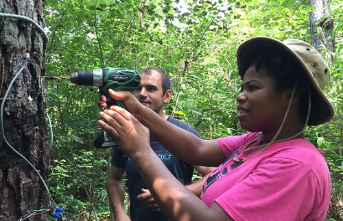 Students in summer Forest Water Stress and Climate Change Experiences for Undergraduates (REU) program conducted fieldwork in the Alligator River National Wildlife Refuge in eastern North Carolina. Photo courtesy of NCSU.