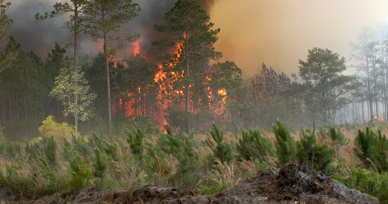 In 2007, the Florida Bugaboo Fire burned for over a month and blanketed parts of Georgia and Florida – including the city of Jacksonville – with heavy smoke. Photo by Mark Wolfe, Federal Emergency Management Agency. Courtesy of Wikimedia Commons.