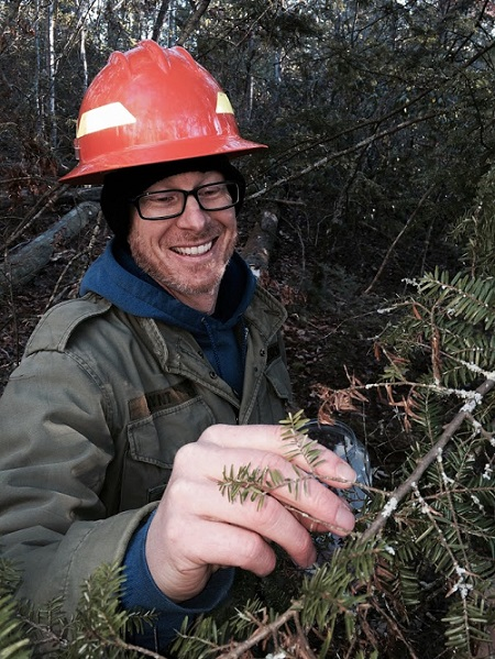 Bryan Mudder releasing biocontrol beetles on infested eastern hemlock tree at Bent Creek Experimental Forest near Asheville, North Carolina. Photo by Bud Mayfield.
