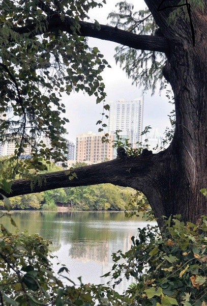 Austin skyline framed by urban forest. Photo by Ron Billings, Texas A&M Forest Service.