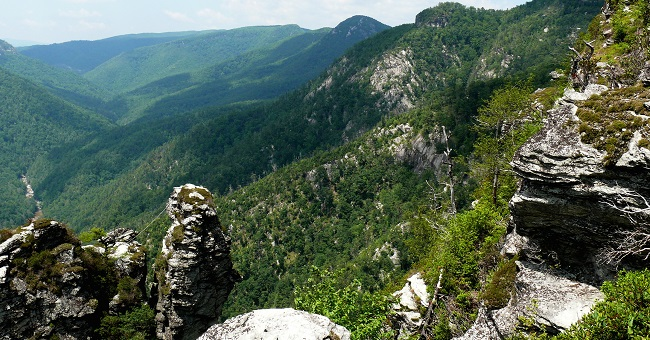 Wilderness areas such as the Linville Gorge Wilderness area in the Pisgah National Forest, provide habitat for hundreds of plant and animal species, plus recreation opportunities for people. Photo by Ken Thomas, courtesy of Wikimedia Commons.