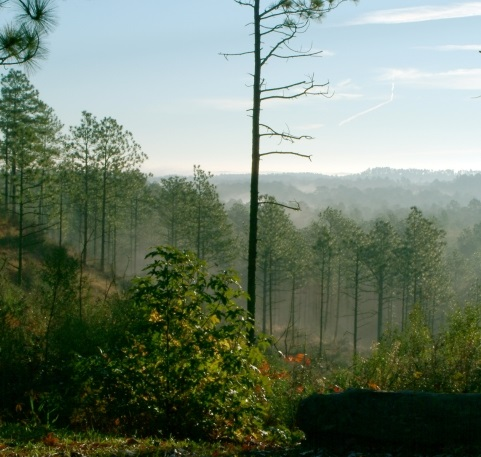 """The sandstone bluffs of the Longleaf Vista Area of the Kisatchie National Forest is known locally as the """"Little Grand Canyon."""" Photo by U.S. Forest Service."""