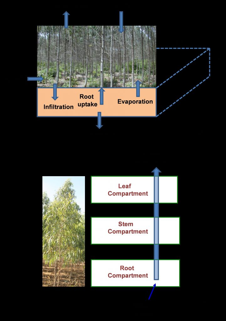 (A) The hydrological processes at the plantation level, and (B) the compartmental model for water movement within the eucalyptus tree used for this study. Models by Ying Ouyang.