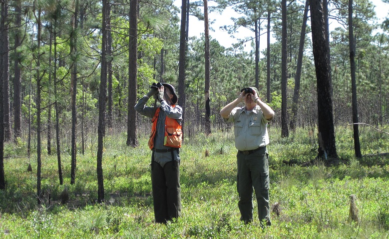 SRS scientist Dale Brockway (left) and Hans Rohr count longleaf pine cones at Bladen Lakes State Forest near Elizabethton, NC, where Rohr is Supervisor. Partnerships like those with Rohr make the long-term study of longleaf pine cone production possible. Photo courtesy of the U.S. Forest Service.