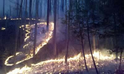 Prescribed fire burning in a forest