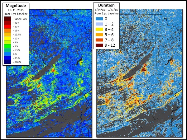 A traditional weekly ForWarn map image (left) shows the magnitude of damage from the 2015 gypsy moth outbreak in Pennsylvania based on percent changes in vegetation greenness. A 12-week Seasonal Duration map (right) shows duration of the disturbance based on the number of weekly monitoring periods in which a loss of vegetation greenness exceeded 3% during the 2015 growing season. Both maps compare vegetation greenness to that of the previous year.