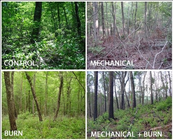 Characteristics of forest that develop when fires are suppressed?