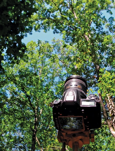 ForestCrowns calculates forest canopy transparency using ground-based digital photos. Photo by U.S. Forest Service.