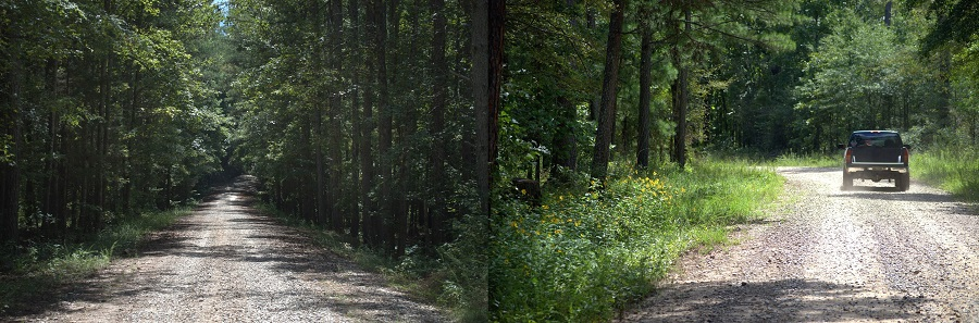 A forest road with dense stands on both sides shades the road edge (left), while a road with wider edges annd thinned stands (right) allows in more light for plants and pollinators. Photo by U.S. Forest.