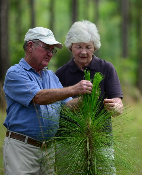 In addition to the realities of estate taxes on forested land, the estate planning guide discusses strategies and tools to interest younger family members in keeping their family forest lands intact. Photo by NRCS>