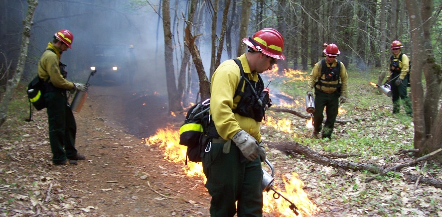 CAFMs promotes communication among forest managers and scientists about using prescribed fire as a management tool in the Appalachian region that stretches from Pennsylvania to Alabama. Photo by U.S. Forest Service.