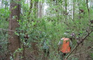 Researchers in a 40-year-old privet stand within the forest. Photo courtesy of the U.S. Forest Service.