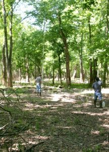 Plot where privet was removed and canopy traps installed for research. Photo courtesy of the U.S. Forest Service.