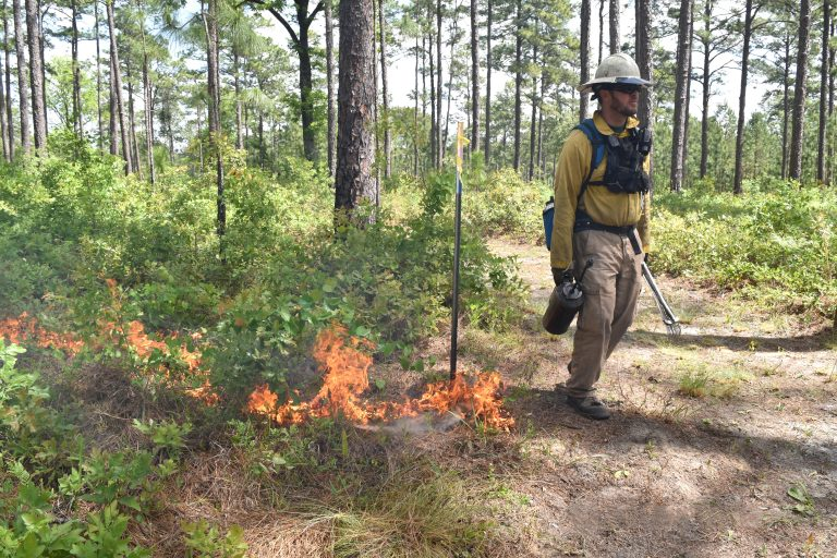 Person setting a prescribed fire