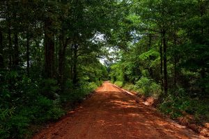 Alabama dirt road