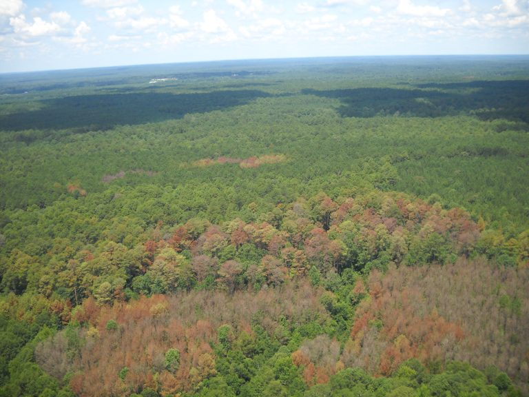 Aerial view of recent southern pine beetle outbreak area in Mississippi. Photo by Ricky Cox and Wade Hosey, USFS.